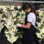 Girl planting via hydroponic